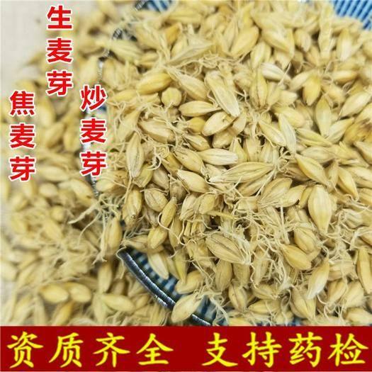 亳州譙城區 麥芽 炒麥芽 焦麥芽 產地直銷量大從優