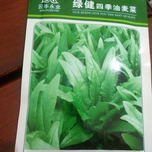 嵩明縣油菜籽種子 芽率好,菜形好,產量高