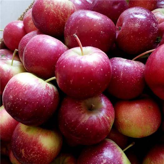 海安市 東北的大秋果脆沙果龍豐果龍秋果特產新鮮水果非海棠果酸甜脆包郵