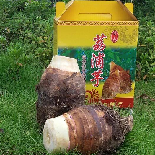 荔浦市荔浦芋頭 產地直供 送禮佳品 一件包郵