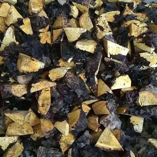 恩施土恩施市大黄种子 优质马蹄大黄,各种中药材,大黄苞芽