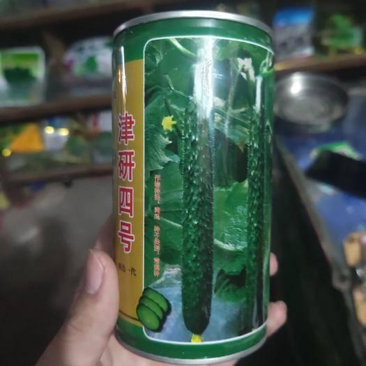 夏邑县 津研四号黄瓜种子 长势强深绿 油亮 有光泽高产量 商品性具