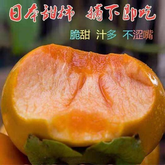 临沂平邑县日本甜柿子苗 嫁接苗 品种齐全 南北方均可种植 包成活包品种