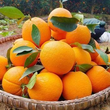 包邮20斤装正宗赣南脐橙寻乌脐橙现摘新鲜多汁福利礼品