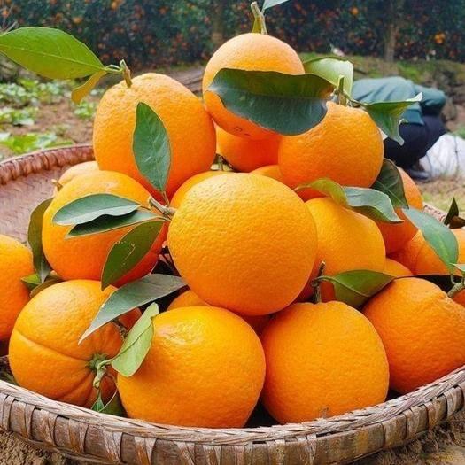 赣州寻乌县 包邮20斤装正宗赣南脐橙寻乌脐橙现摘新鲜多汁福利礼品