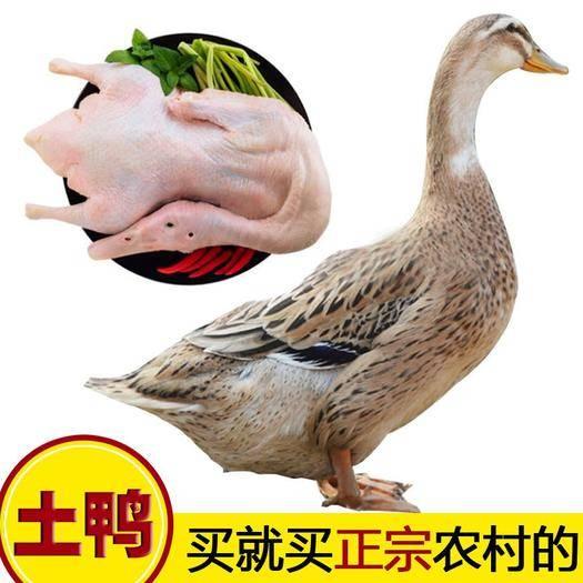 新沂市 【冷鏈包郵】農家散養鴨*體現殺土鴨鮮鴨麻鴨整只生鮮食材批