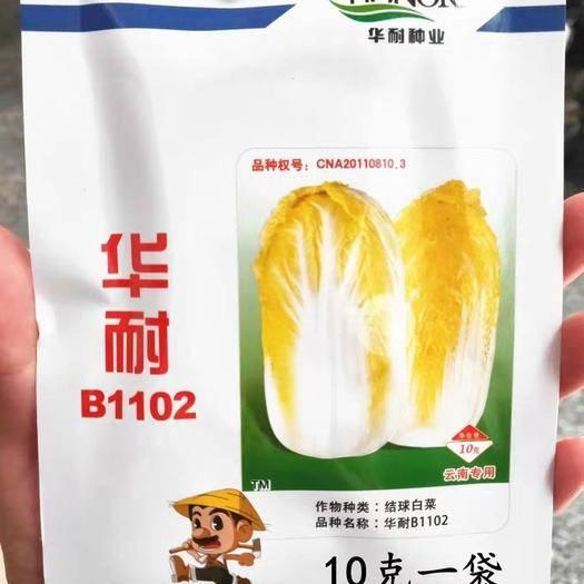 玉溪通海县 华耐B1102娃娃菜种子