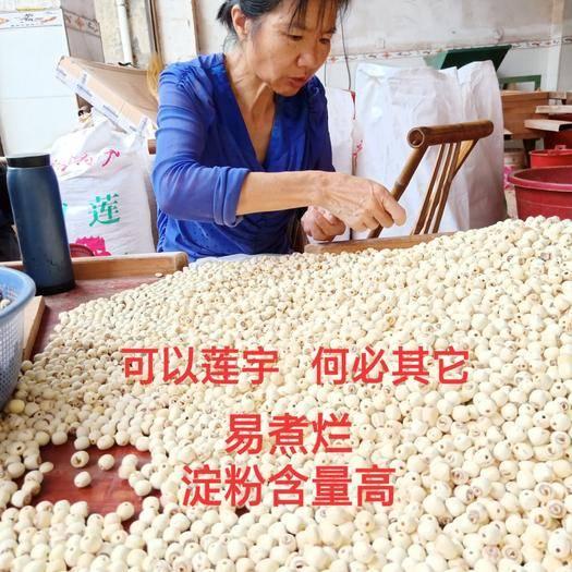 湘潭县 湖南磨皮白莲子 易煮烂 淀粉含量高 厂家直销