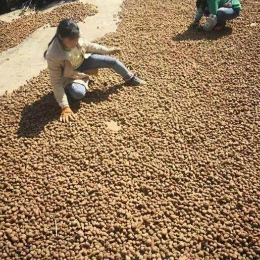 曲靖富源縣 魔芋種子批發 提供技術包回收 支持全國包郵周邊專車送貨