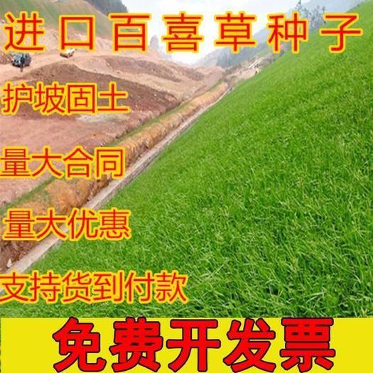 常州天宁区 百喜草种子 道路护坡 水土保持 牧草草籽 公路 堤坝绿化草