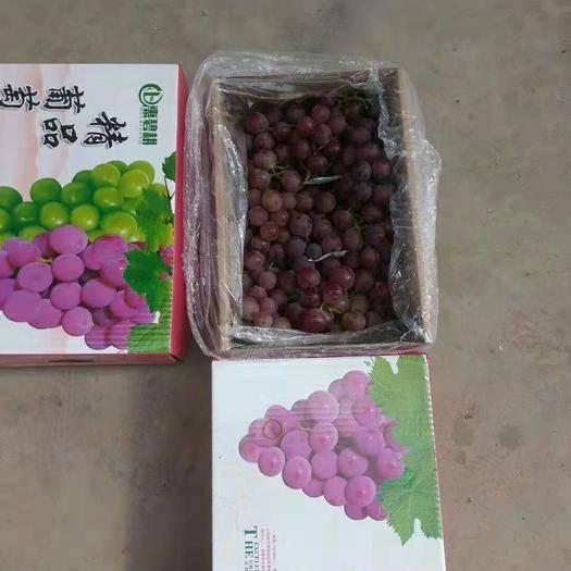 晋州市 礼品盒巨峰葡萄,头茬,二茬,应有尽有
