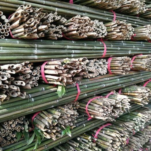 衡阳麻竹 新货上市,保证质量。