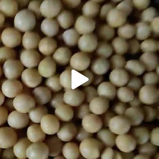 齐齐哈尔讷河市芽豆690 东农690芽豆