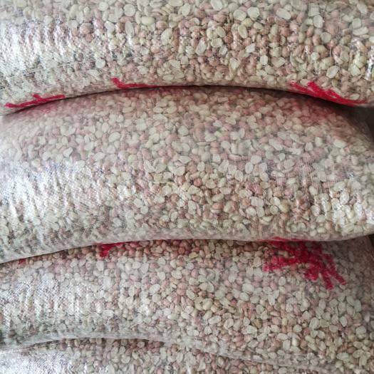 中牟縣油料花生米 榨油專用   小白沙油料米