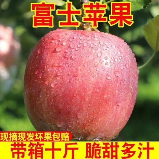 临猗县 【包邮破损包赔】红富士苹果水果冰糖心新鲜批发10斤装
