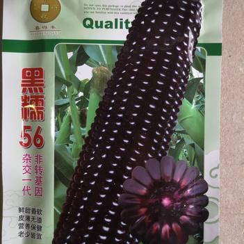 黑色糯玉米种子   鲜甜香软 皮薄无渣 营养保健