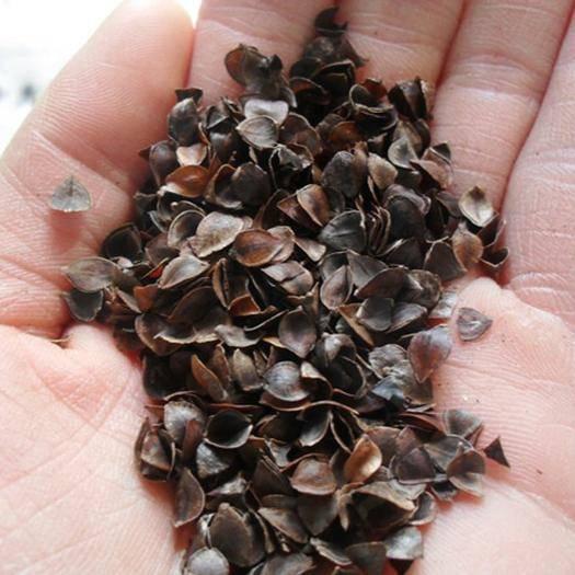 保定安国市荞麦壳 水洗 农家一手货源 平价直销 袋装 包邮
