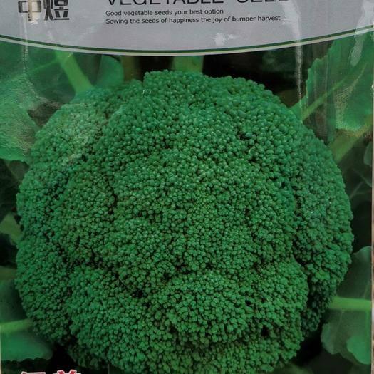商丘夏邑县 绿美西兰花种子 抗病优质 球形优秀 蘑菇型西兰花种子