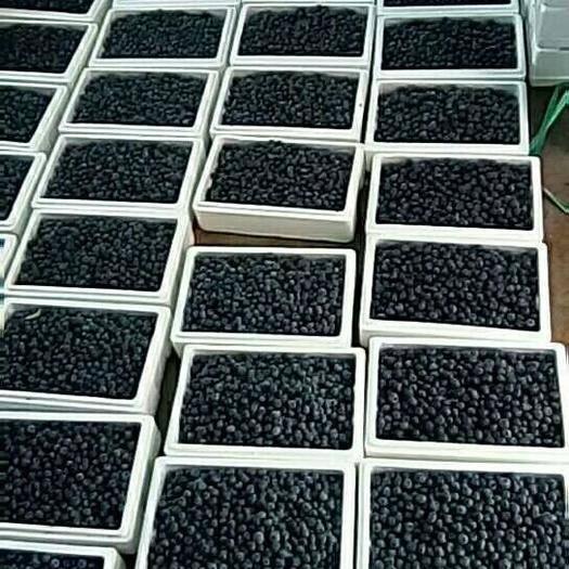 連云港贛榆區 藍莓加工收購商,和市場鮮果采購商