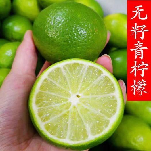 平邑县青柠檬苗 基地直销,保证成*率,保证现挖苗,