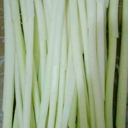 济南 四季供应鲜蒲菜