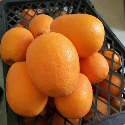赣州会昌县 橙子,脐橙品种多,品质好,诚信经营,用心服务每一位