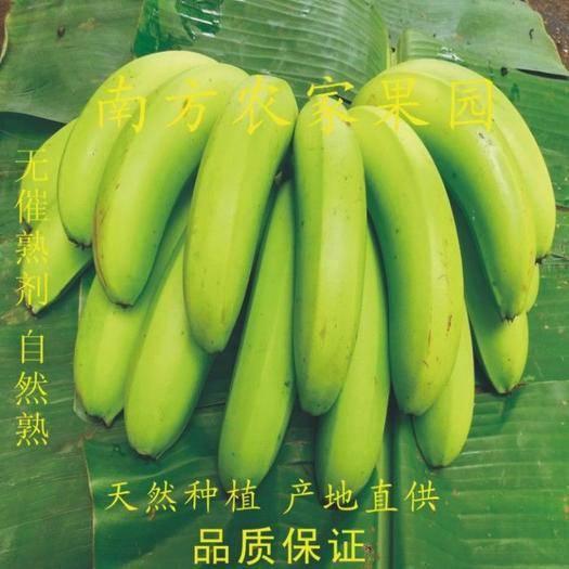 贵港桂平市 【坏果包赔】广西高山香蕉当季新鲜水果自然熟现摘现发包邮