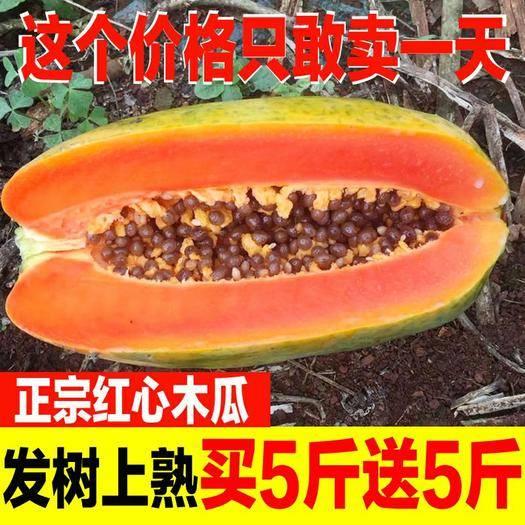 隆安县 【坏果包赔】红心木瓜冰糖心皮薄多汁新鲜水果现摘现发包邮