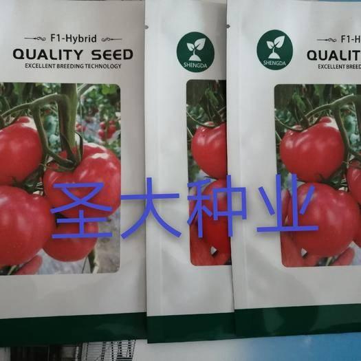 潍坊寿光市 荷兰引进硬粉西红柿种子,抗死颗、抗病毒,农户首选品种