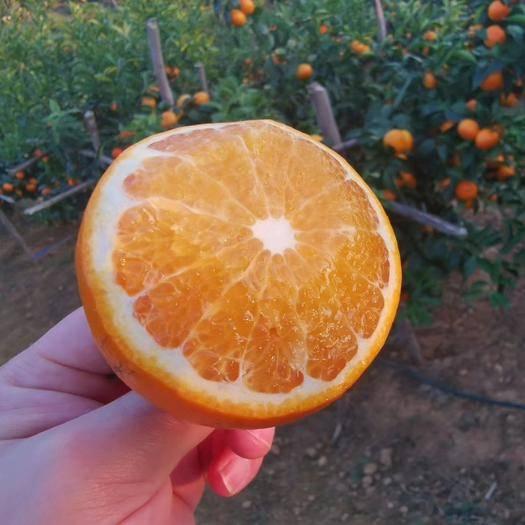 眉山东坡区 新鲜水果沃柑现摘现发非皇帝柑支持一件代发量大优惠