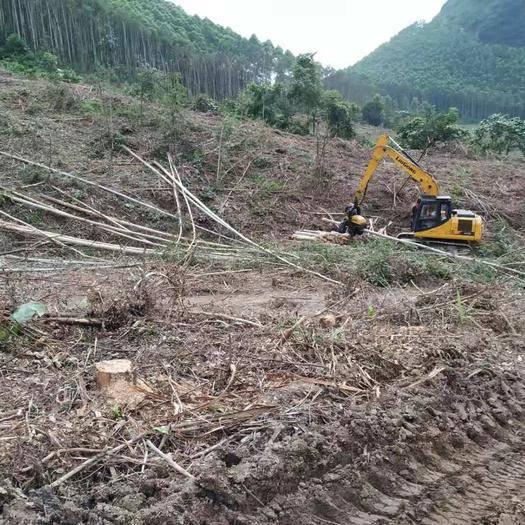 钦州 林场采伐树枝