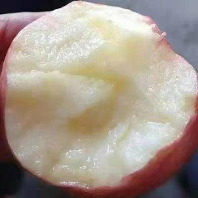 垣曲县 丑苹果一箱起包邮 净重8.5-9.5 味美多汁量大优