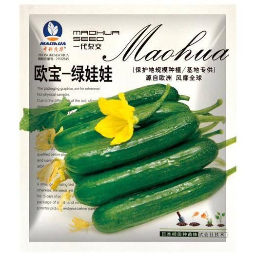 夏邑县 欧宝绿娃娃荷兰水果黄瓜种子,无刺全雌,一叶多瓜,春秋耐寒甜