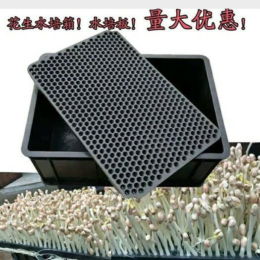 兰陵县 厂家直销, 水培花生芽种植箱