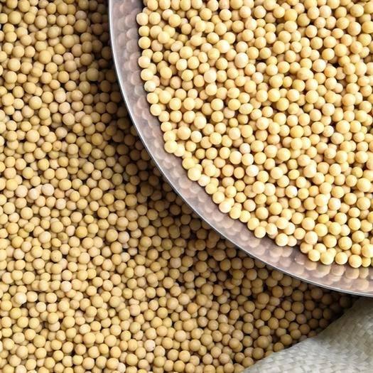 贵阳修文县 芽豆690(出芽率98%)直发贵州各地 101.8斤/包