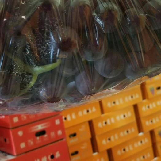 晋州市 礼品盒巨峰葡萄