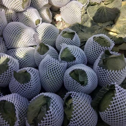 涼山西昌市綠甘藍 四川西昌優質甘藍已大量上市,歡迎新老客戶來訂購