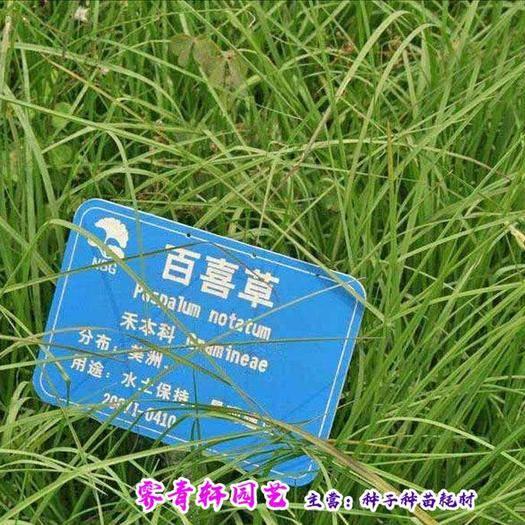 郑州二七区 百喜草种子宽叶雀卑种子新种子包邮