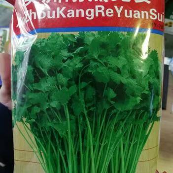 澳洲耐热香菜种子香味浓纤维少移栽陪产量高品质优秀