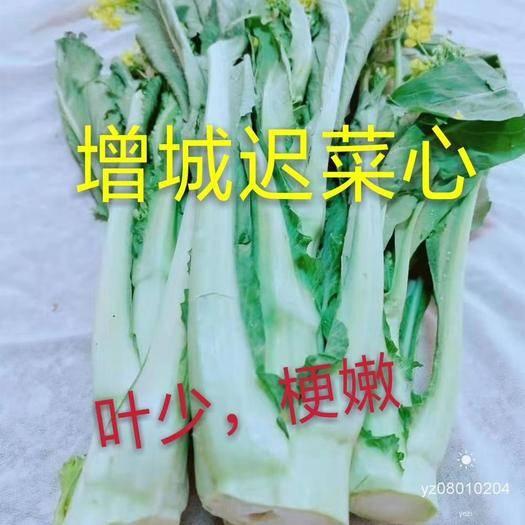 廣州 增城遲菜心 禮盒發貨順豐快遞  增城遲菜心是遠近馳名的優質
