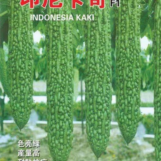 昆明 進口苦瓜種子,綠苦瓜種子,田間表現整齊,瓜色油亮,長勢旺