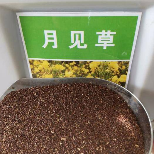 郑州 月见草种子美丽月见草种子新种子包邮