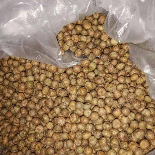 兰陵县豌豆苗 加拿大进口麻豌豆,碗豆苗专用芽率高,茎粗,口感好。