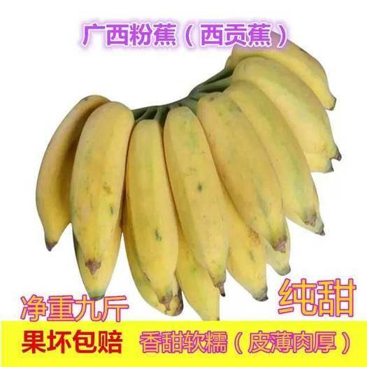 南宁西乡塘区西贡蕉 广西粉蕉 香甜软糯 纯甜 9斤包邮