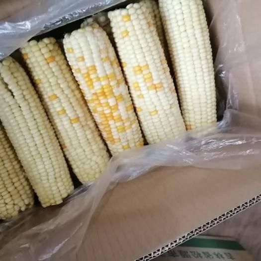 蚌埠速冻糯玉米 速冻玉米,量大优惠