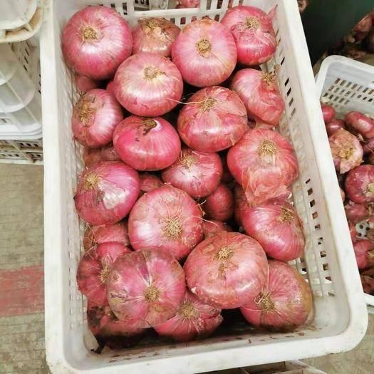 济宁金乡县 金乡,二红洋葱,大红洋葱各个产地规格品种都有,天天有货
