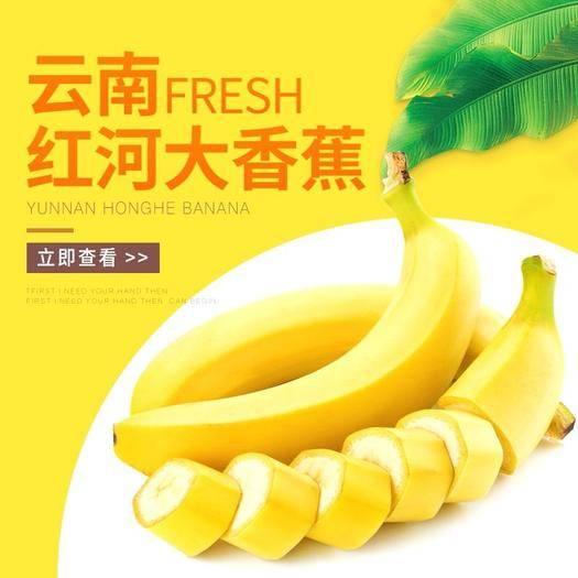紅河紅河縣 (正常發貨)云南香蕉10斤裝包郵價凈重9斤產地直發壞果包賠