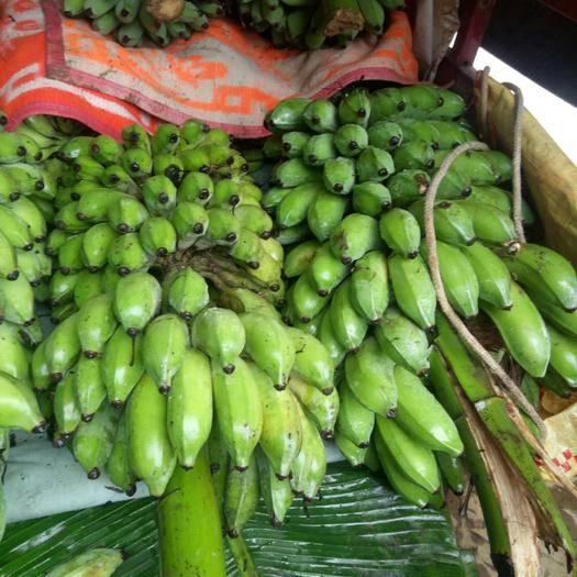 册亨县 大量西贡蕉出售