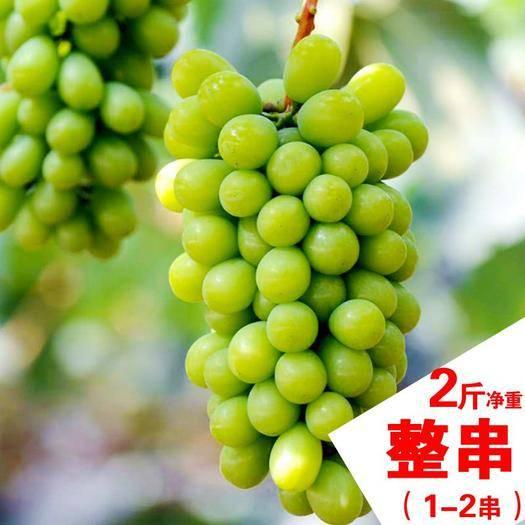 个旧市 2斤顺丰空运云南阳光玫瑰晴王青提新鲜水果无籽葡萄香印提子
