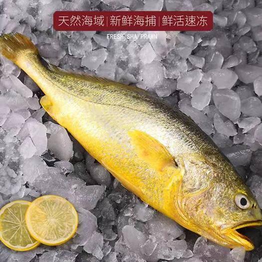寧德霞浦縣 順豐包郵 5斤5條裝,福建霞浦海捕大黃魚,批發,一件代發